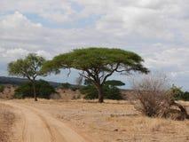Safari in Africa Tarangiri-Ngorongoro Stock Photo