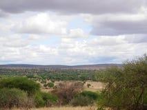 Safari in Africa Tarangiri-Ngorongoro. Jeep, road, road to paradise, travel, jeep ride, jeep safari, guide, trees in Africa, safari in Tanzania, savanna in stock image