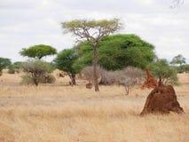 Safari in Africa Tarangiri-Ngorongoro. Jeep, road, road to paradise, travel, jeep ride, jeep safari, guide, trees in Africa, safari in Tanzania, savanna in royalty free stock photos