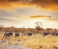 Safari. African safari Stock Photography