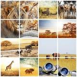 Safari. African safari in Etosha,Namibia Stock Images