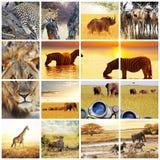 Safari. African safari in Etosha,Namibia Stock Photo