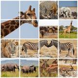Safari Stock Photography