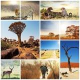Safari Royalty Free Stock Image