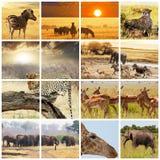 Safari. African safari in Etosha,Namibia Stock Image