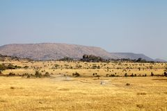 Safari in the african savanna. African savanna in the Serengeti plains where two cars are going for the safari, Tanzania Royalty Free Stock Photography