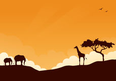 Safari. African safari wildlife sunset background Stock Photos