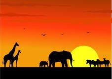 Safari Afrika Lizenzfreies Stockfoto