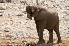 Safari Afrika stockfotos
