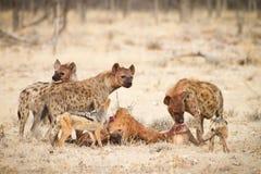 Safari Afrika lizenzfreie stockbilder