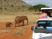 Safari in Afrika Lizenzfreie Stockfotografie
