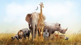 Safari Animals i den Afrika komposit arkivfoton