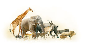 Free Safari Animals Walking Side Horizontal Banner Royalty Free Stock Photo - 86666225
