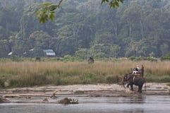 Safari au Népal Image libre de droits