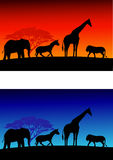Safari background Stock Photography