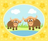 Safari background with buffaloes Stock Photos