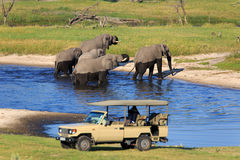 Safari. At the Boteti in Botswana Royalty Free Stock Image
