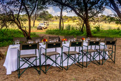 Safari Breakfast 3361 Royalty Free Stock Image