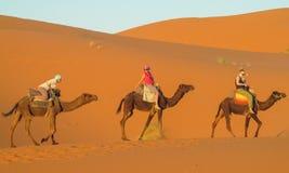 Safari on camels back in Sahara. Camels caravan in the sand desert dunes of Sahara. Safari on camels back royalty free stock photo