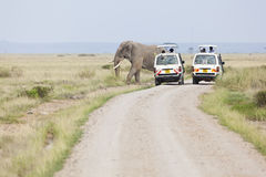 Safari Cars And Elephants, editorial Royalty Free Stock Photos