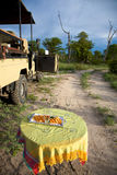 Safari Champagne Stockfoto