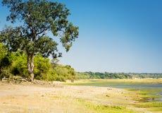 Safari in Chobe National Park. Safari route through Chobe National Park, Botswana along the Chobe River Royalty Free Stock Photography