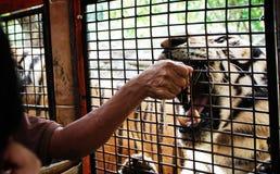Safari Close Encounters Immagini Stock Libere da Diritti