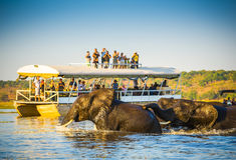Safari d'éléphant africain images libres de droits