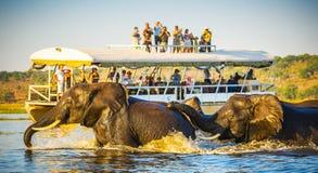 Safari d'éléphant africain image stock
