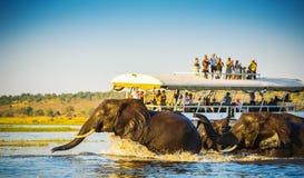 Safari d'éléphant africain photographie stock