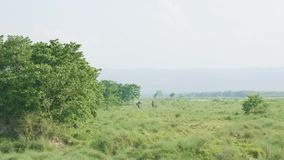 Safari d'éléphant avec des touristes dans la jungle, parc national dans Chaitwan, Népal clips vidéos