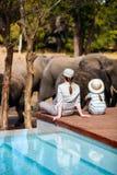 Safari da família fotografia de stock