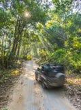 Safari da floresta Fotografia de Stock