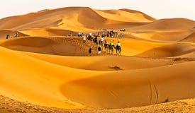 Safari de chameau dans la lumière d'or du coucher du soleil dans le désert marocain Images stock