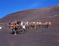 Safari de chameau, Lanzarote image stock