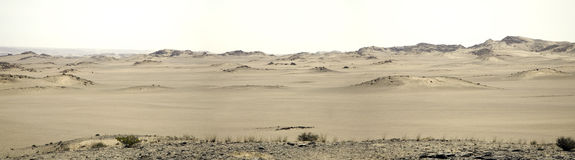 Safari de esqueleto da costa Imagens de Stock