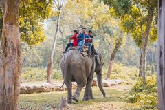Safari de jungle d'éléphant au parc national Népal de Chitwan image stock