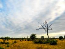 Safari de l'Afrique Photos libres de droits