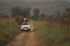safari de l'Inde image stock