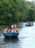 Safari de rivière de Kinabatangan Photos libres de droits