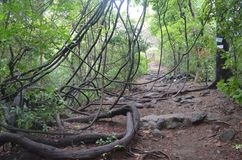 Safari de selva Imagenes de archivo