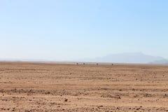 Safari del deserto Immagine Stock