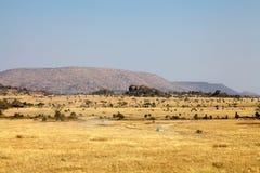 Safari in der afrikanischen Savanne lizenzfreie stockfotografie