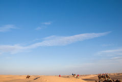 Safari in the desert. Caravan of camels on a rest royalty free stock photos