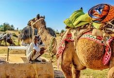 Safari. Desert safari in Thar desert stock photos