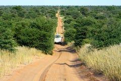 Safari di Kalahari Fotografia Stock Libera da Diritti