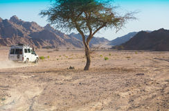 Safari do deserto Imagem de Stock Royalty Free