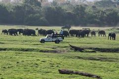 Safari do elefante em Sri Lanka fotografia de stock royalty free