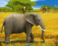 Safari - elephants - illustration for the children Royalty Free Stock Photography