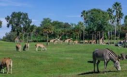 Safari enclosure full of animal stock image
